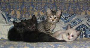cats by ianandkillian