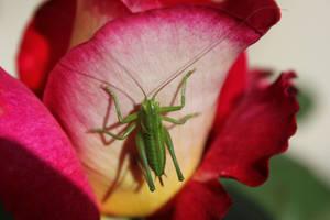 When Lady Grasshopper take a sunbath by Sally-MicKeY-FinN