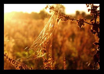 September Spider by Daisyrainbow