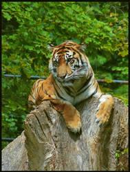 tiger by jeftones