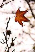 The last to Fall by exc-ELLEN-t