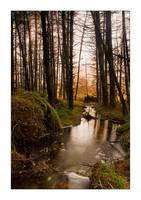 Etive Forest by henroben