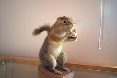 Squirrel by hepdarcan