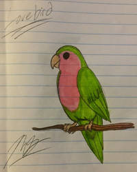 Lovebird by ShiningDreamer