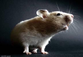 Hamster Mile by mudri