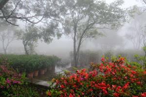 mysterious garden by artspring