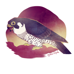 Peregrine falcon by graciegra