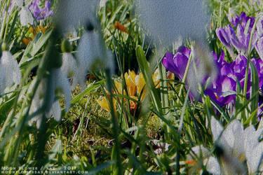 Garden1 - Hidden Beauties by MoonFlowerSax