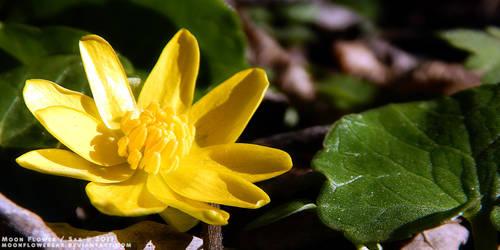 Garden1 - Yellow Flower by MoonFlowerSax
