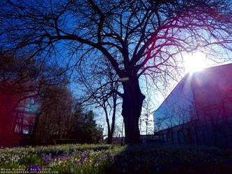 Garden1 - Speed Of Light by MoonFlowerSax