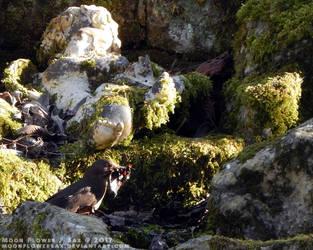 Garden1 - Nest Material by MoonFlowerSax