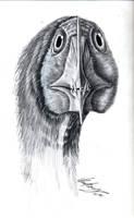 Ornithocheirus giganteus by liliensternus