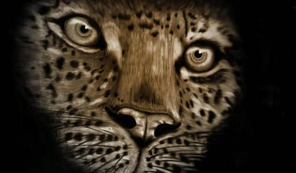 Leopard by liliensternus