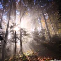 autumnsun by BOsKiKroKodyL