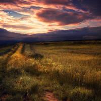 orangeday by BOsKiKroKodyL