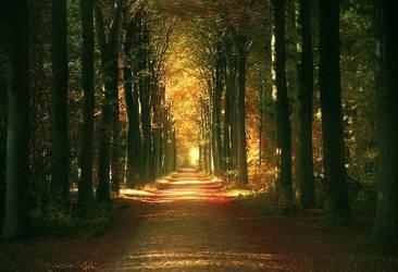 Herfst by LaMusaTriste