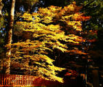 Golden Tree by fedex32