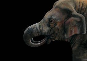An indian elephant by grecioslaw