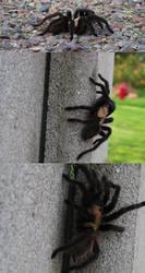 tarantula wat by lethalwire