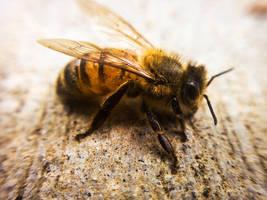 Bee by EYADSTUDIO