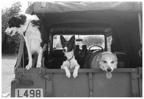 3 dogs 1 landrover by Plug1nbaby