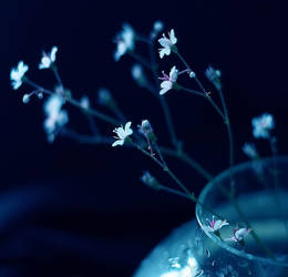 Flowers in my soul by LonelyPierot