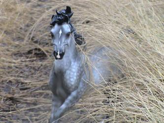 Wild Bush by Horseloverjump