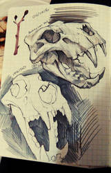 004/365 - Barbary Lion Skull by NesoKaiyoH