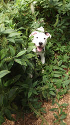 Happy Puppy by Tiamimi
