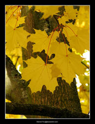 Golden Autumn by SilivrenTinu