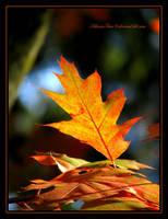 Glowing Leaf by SilivrenTinu