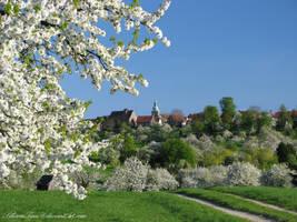 Spring Glory by SilivrenTinu