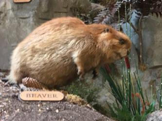 Gratuitous Beaver Shot by The-Darkwolf