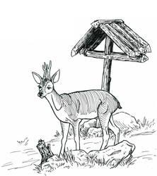 Roe Buck by The-Darkwolf