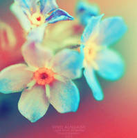 Forget me not. .. by light-from-Emirates