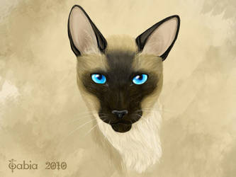 Siamese cat by Tabia