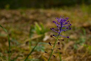 Blueflower by Theme3