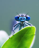 portrait of a dragonfly by Dementor3D