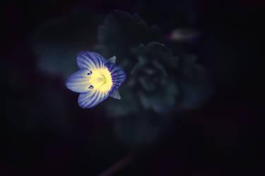 Lantern for lost souls by Serdar-T