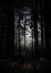 Woods by igreeny