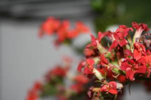 flower1 by PetZ-I