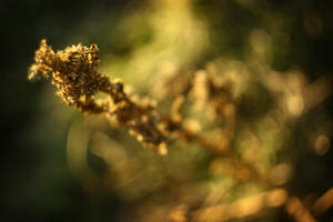 Natural3 by PetZ-I