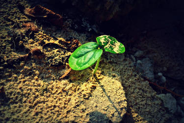 Sprout... by rileypluserin
