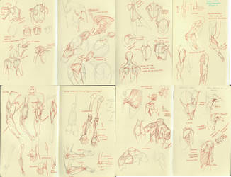 anatomy dump 3 by kakimari
