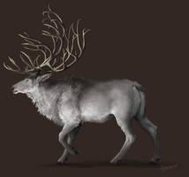 A Deer by apeldille