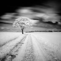 Alone in the field by correiae