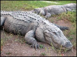 crocodile by LikaTheSheep