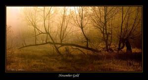 November Gold by bamako