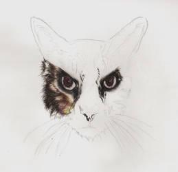 Kitty Cat by Wishfuladventurer