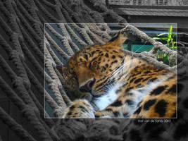 WildCat Hangmat by dutchgoblin